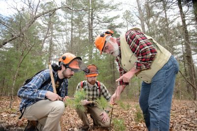 Tom Worthley working with students in the UConn Forest