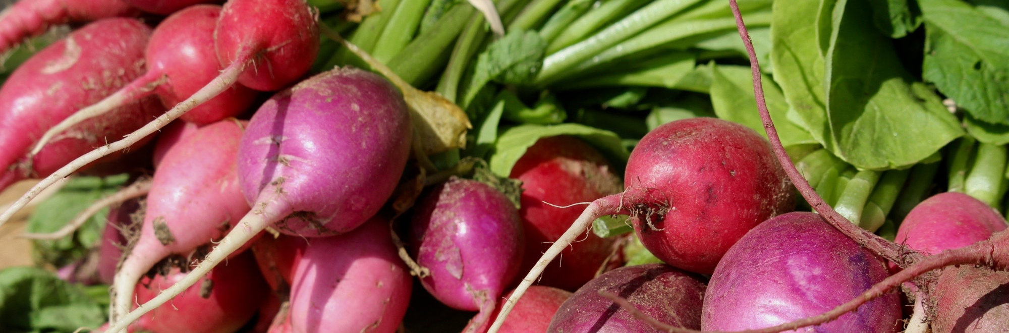 radishes stacked on a table at a farmers' market