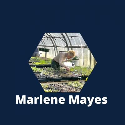 Marlene Mayes