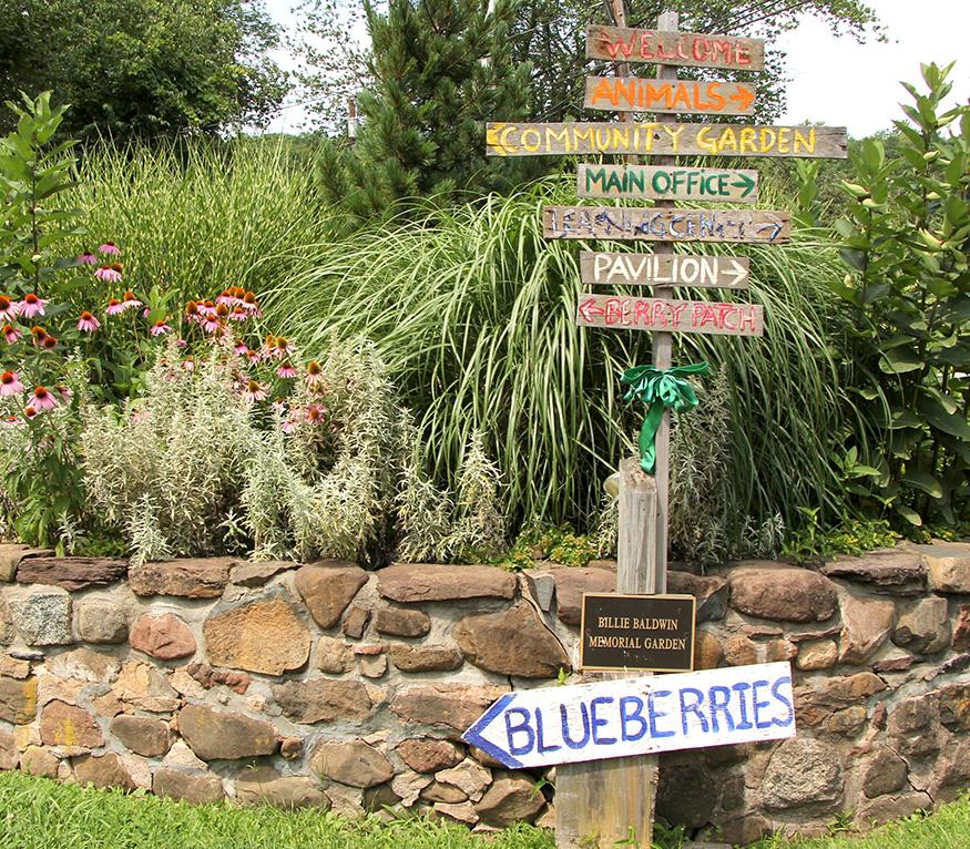 flower garden with signs